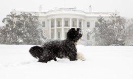 obamas-dog-Bo--001